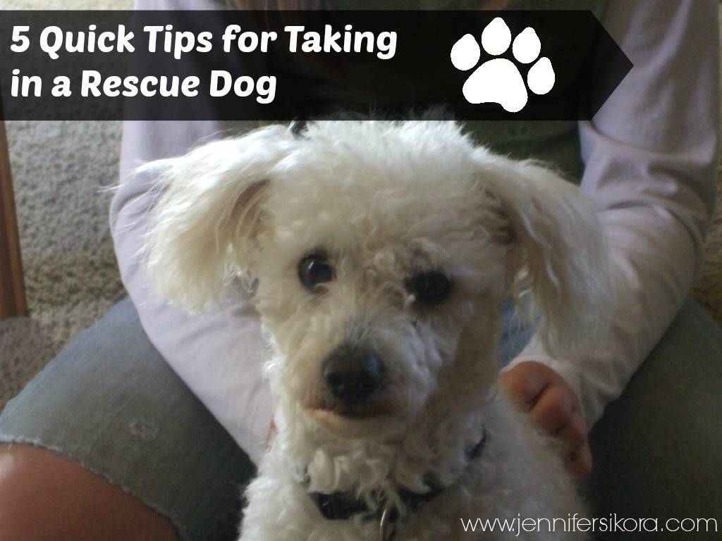 5 Quick Tips for Taking in a Rescue Dog