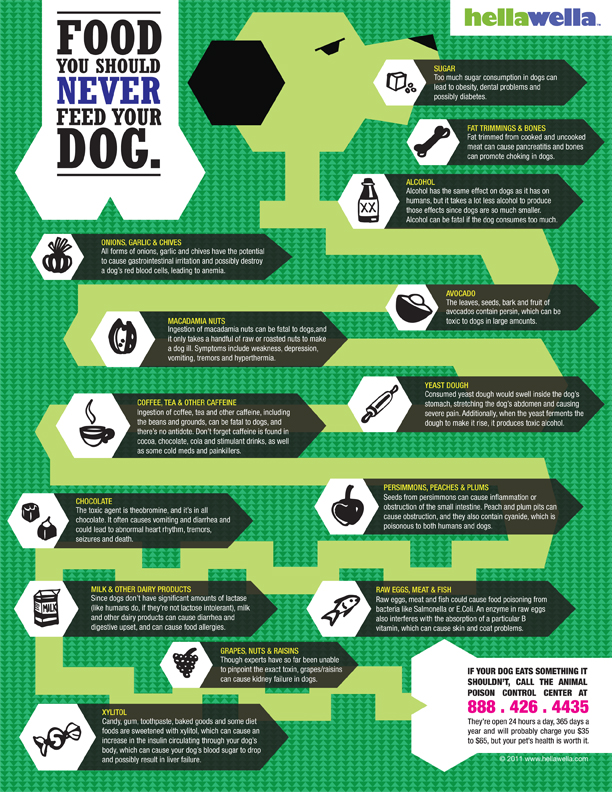 Foods That You Should Never Feed Your Dog