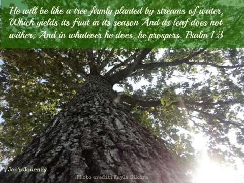 A Tree Firmly Planted