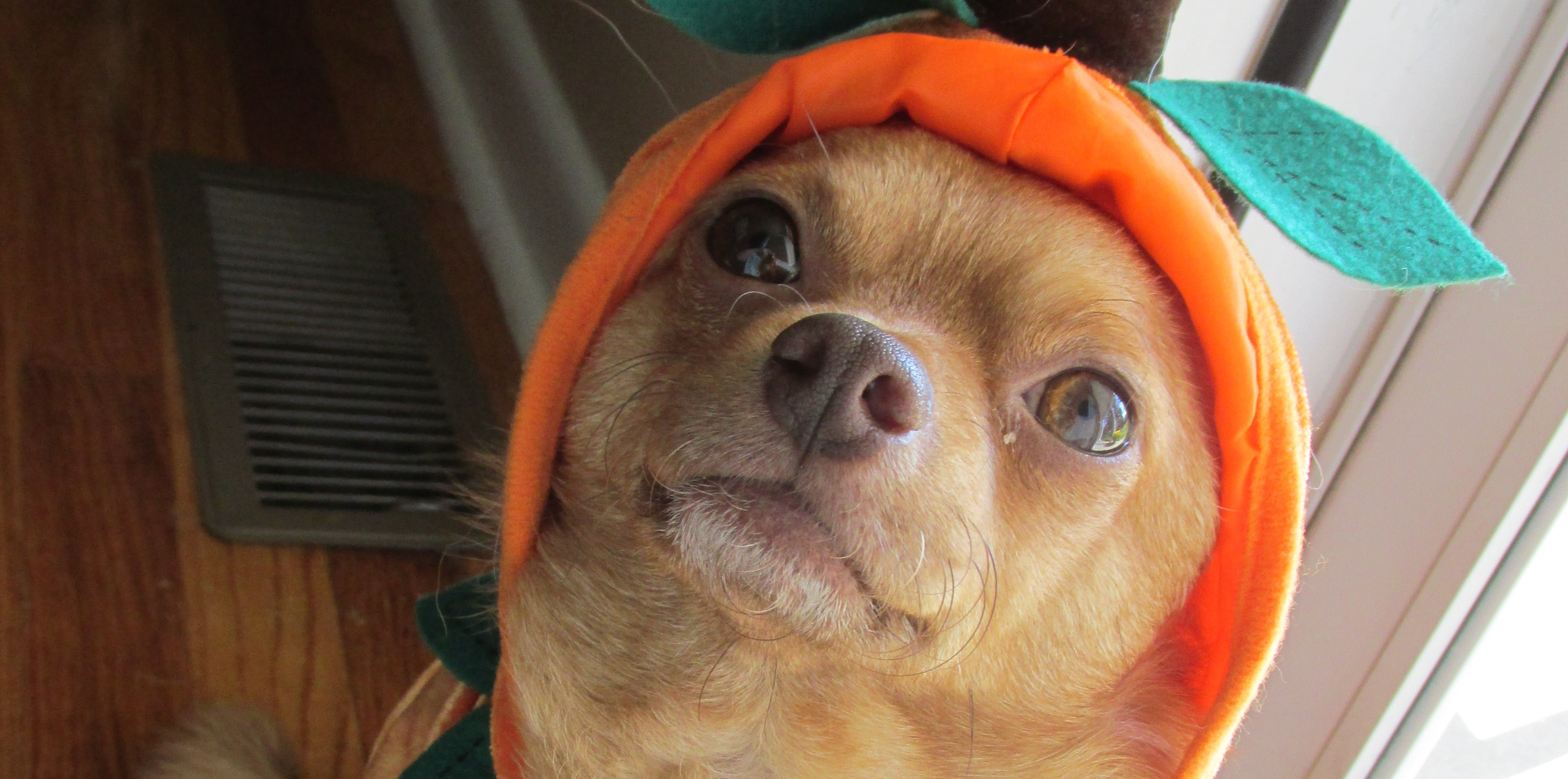 How to Keep Your Pet Safe This Halloween