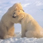 cute-animal-hugging-pictures-014