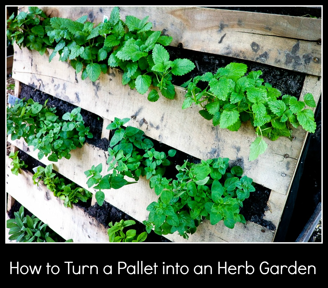 How to Turn a Pallet into an Herb Garden