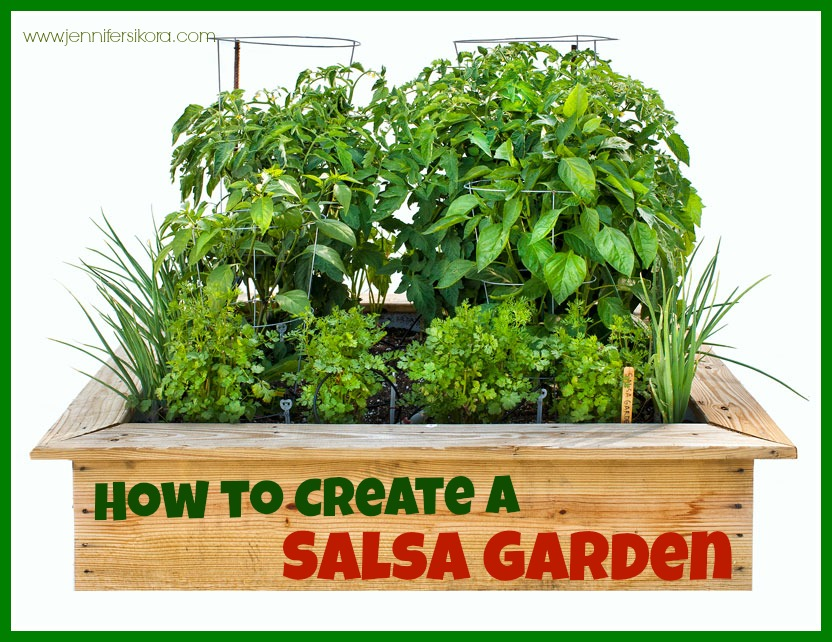 How to Create a Salsa Garden