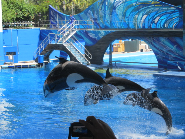 Our Trip to Sea World in Orlando, Florida