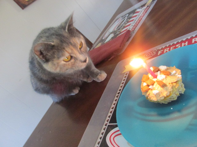 Celebrating Your Pet's Birthday