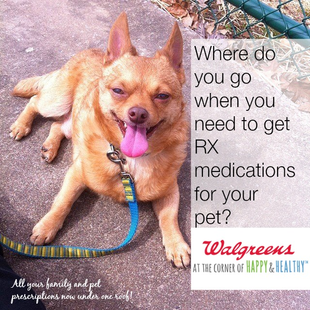 When Your Pets Get Sick – Where Do You Go For Medicine? I Use Walgreens Pet Meds! #WalgreensRX
