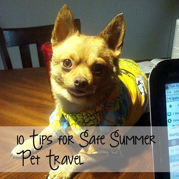 10 Tips for Safe Summer Pet Travel