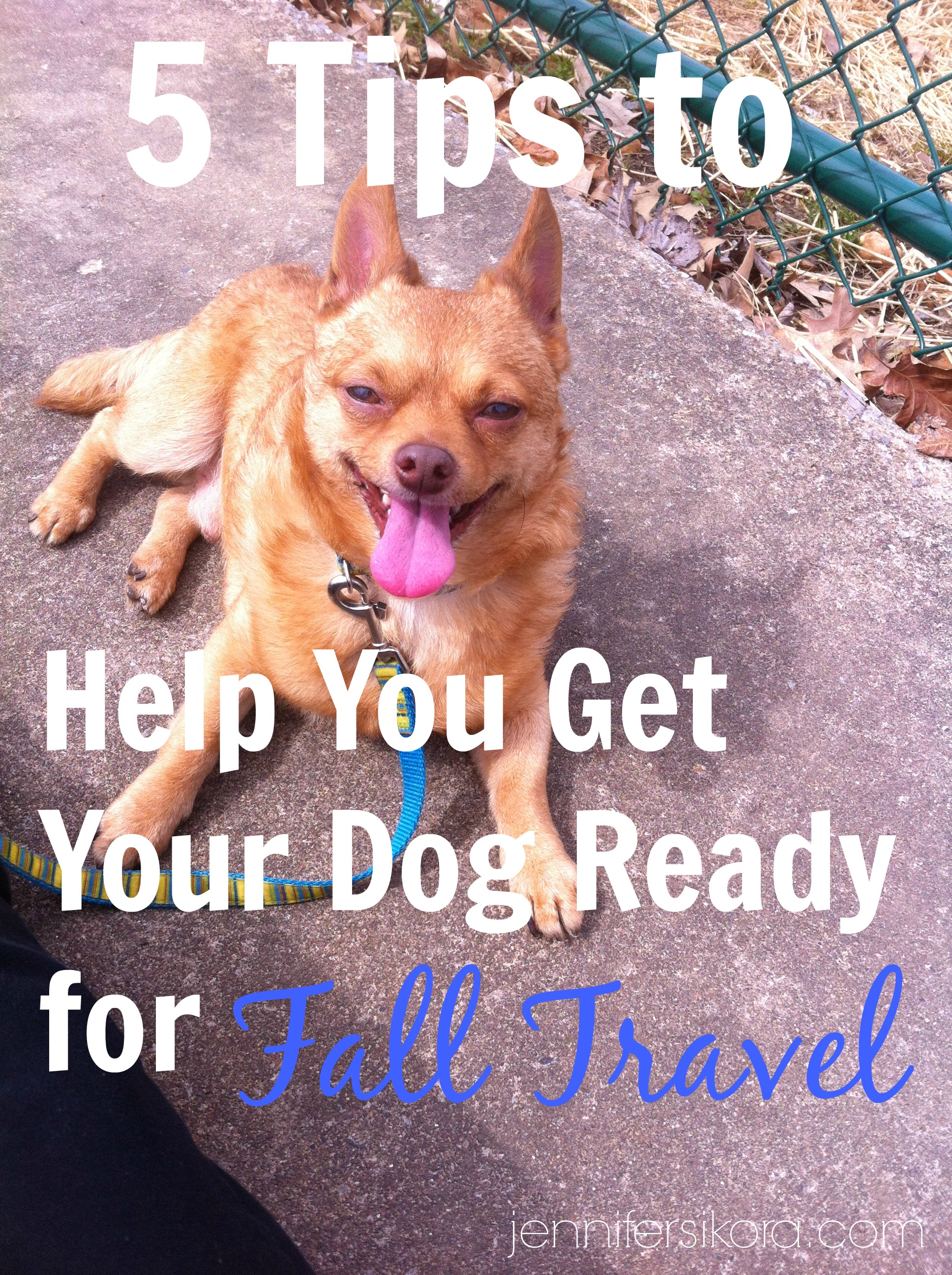 5 Tips to Get Your Pet Ready for Fall Travel