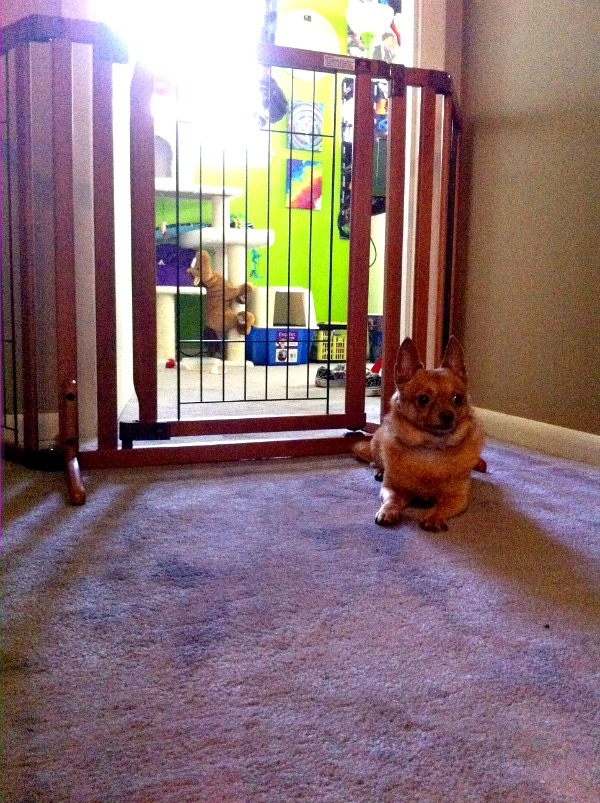 Keep Your Pets Safe This Holiday Season with a Richell Pet Gate #RichellPet