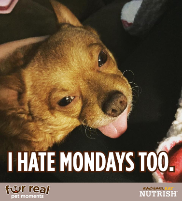 Tucker meme - I hate Mondays too