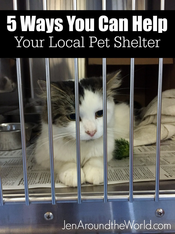 5-ways-you-can-help-your-local-animal-shelter