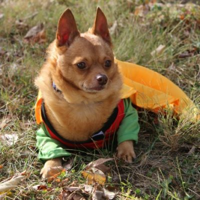 How to Safely Involve Your Pets in Your Halloween Festivities