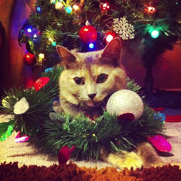 mittens-helping-decorate-the-tree