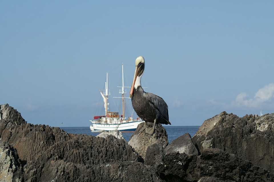 5 Reasons Why You Should Experience the Galapagos On A Cruise