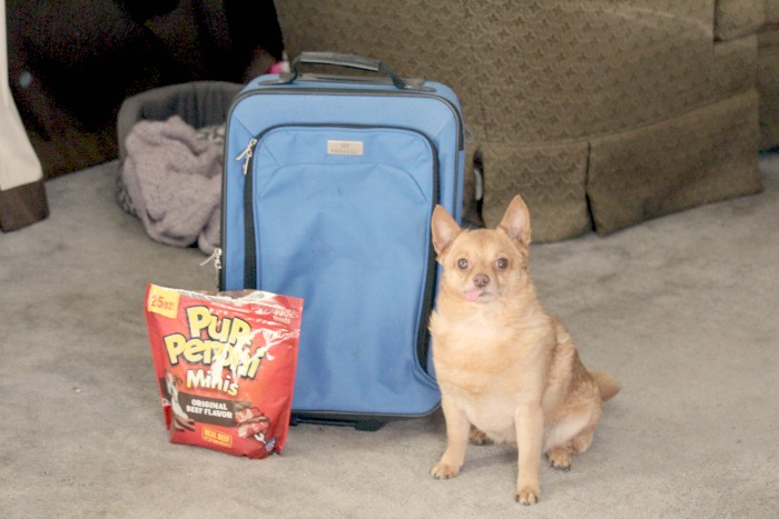 5 Things You Should Bring With You When You Travel With Your Pet (Hint* Don't forget the Pup-Peroni®)