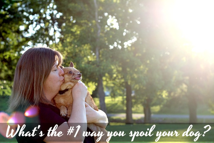 5 Over the Top Ways I Spoil My Dog #DogMomTruth